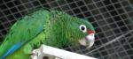 iguacaparrotflightcagetouched670
