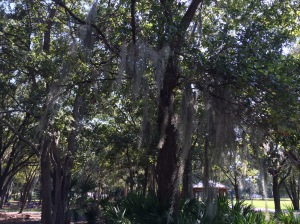 A walk along the path. I love Spanish moss in the trees.