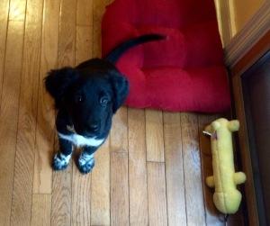 Meg's puppy